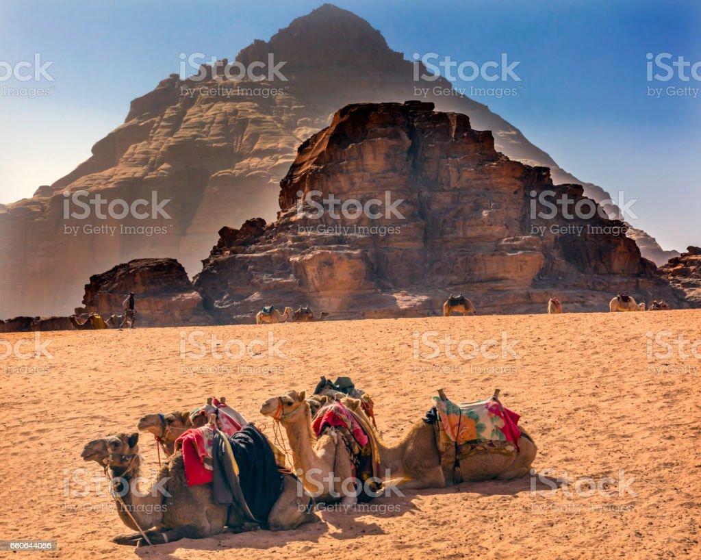 Rock Formaations Camel Valley of Moon Wadi Rum Jordan stock photo