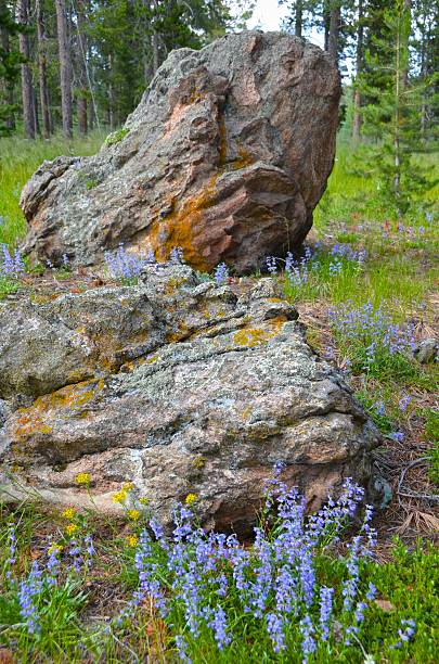 Rock formation in wildflowers stock photo