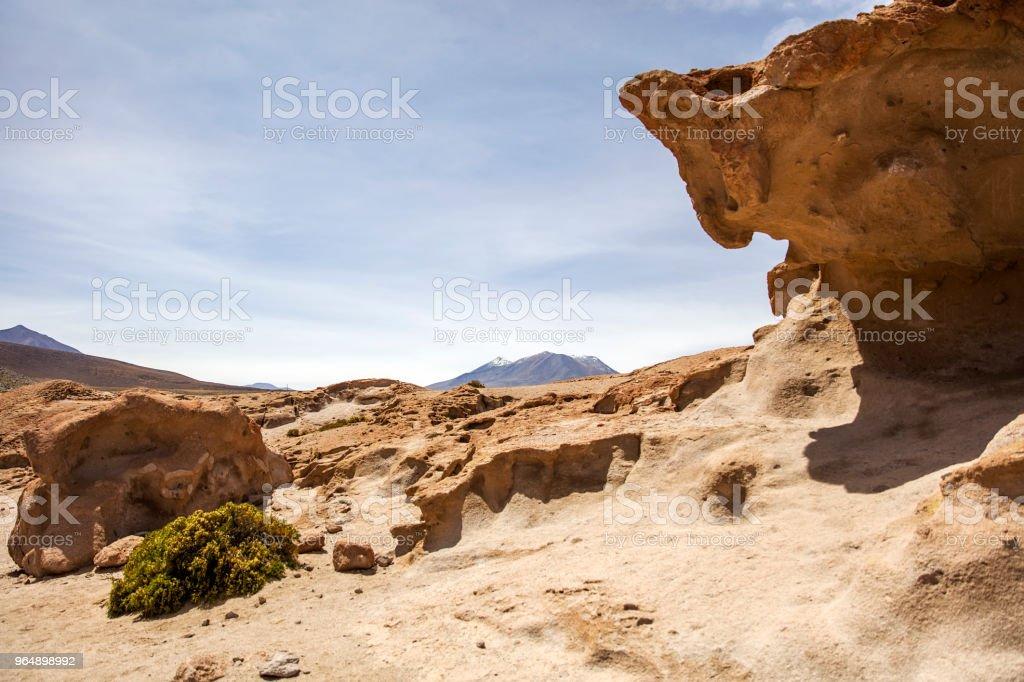 玻利維亞大理沙漠岩層 - 免版稅動物圖庫照片