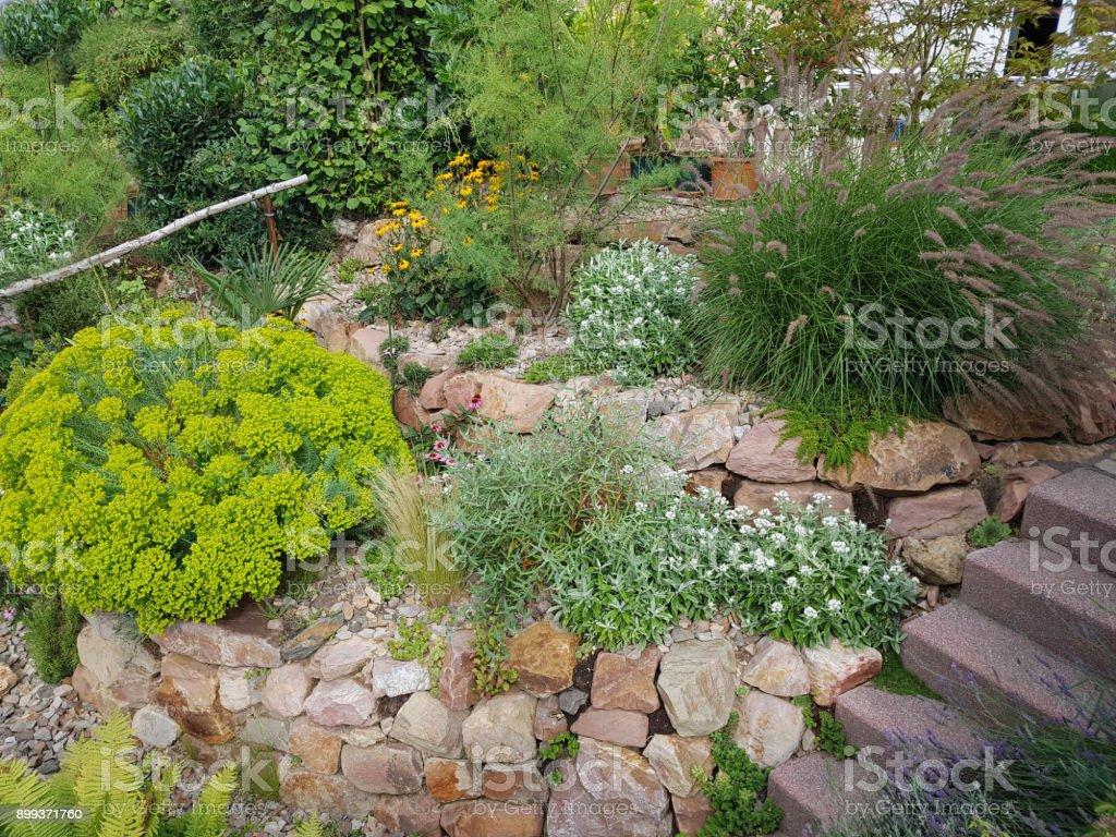 Photo libre de droit de Jardin De Rocaille Asclépiade De ...