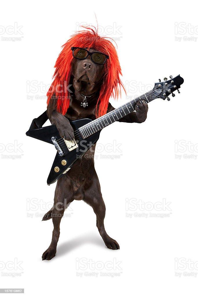 Rock God Dog Guitar Hero stock photo