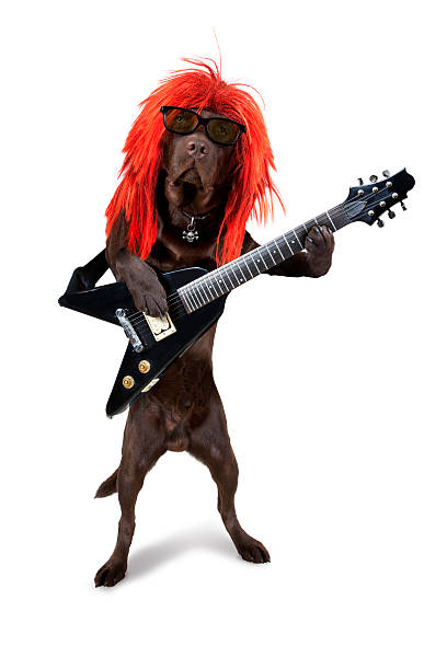rocker hund guitar hero - rock tiere stock-fotos und bilder