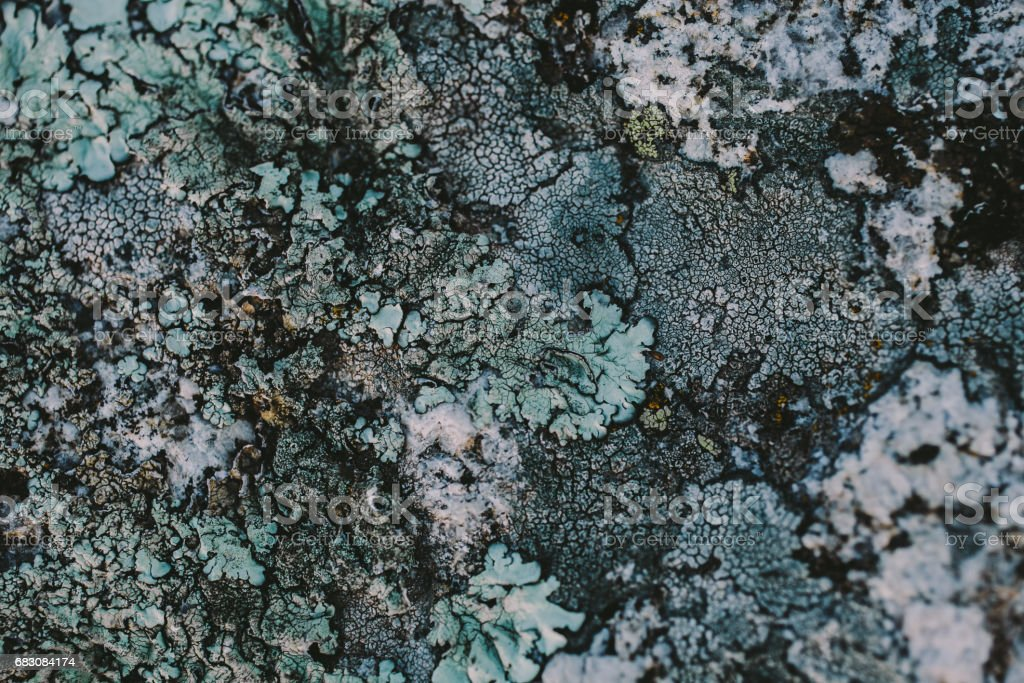 Rock, lichen and moss texture and background. Mossy stone background. Abstract texture and background for designers. Mossy stone texture. Closeup view of lichen and moss. zbiór zdjęć royalty-free