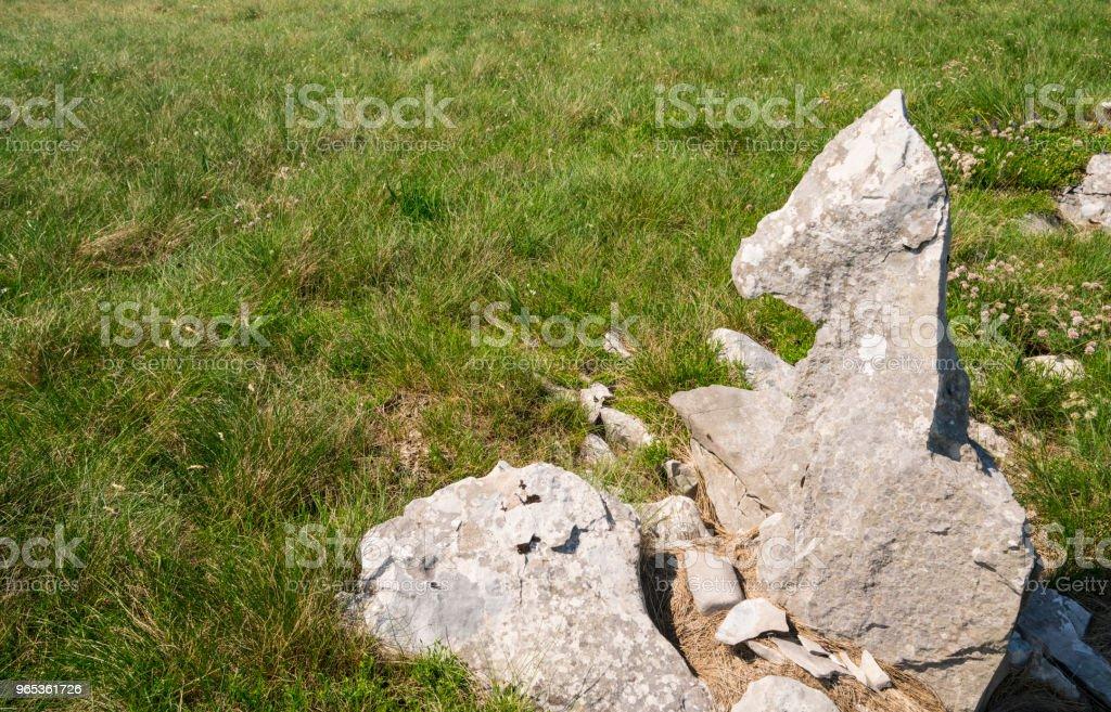 Rock like a foal lying on grass on Zalipnik valley saddle, Slovenian Istria near Croatia border zbiór zdjęć royalty-free