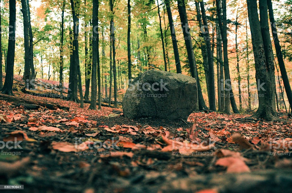 rock on forest stock photo