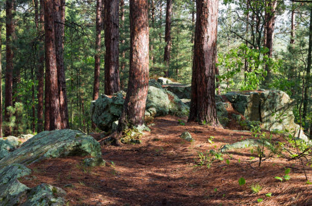 rock outcrop on woodland trail - outcrop stock pictures, royalty-free photos & images
