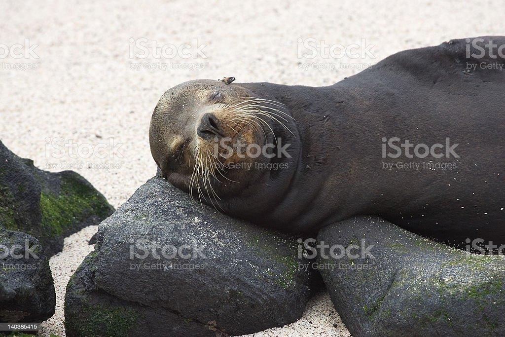 Rock Pillow - Royalty-free Animal Whisker Stock Photo