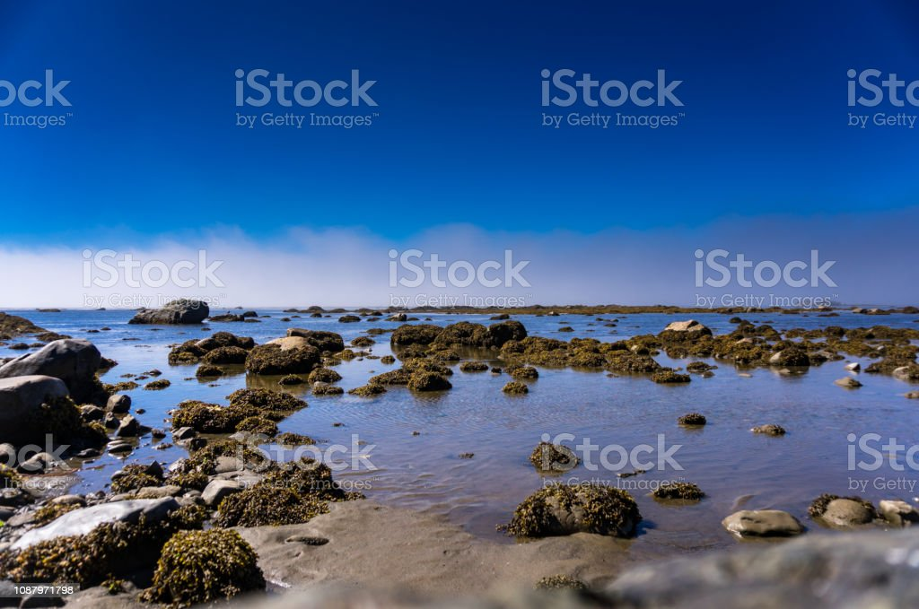 Rock Pools on the Olympic Peninsula stock photo