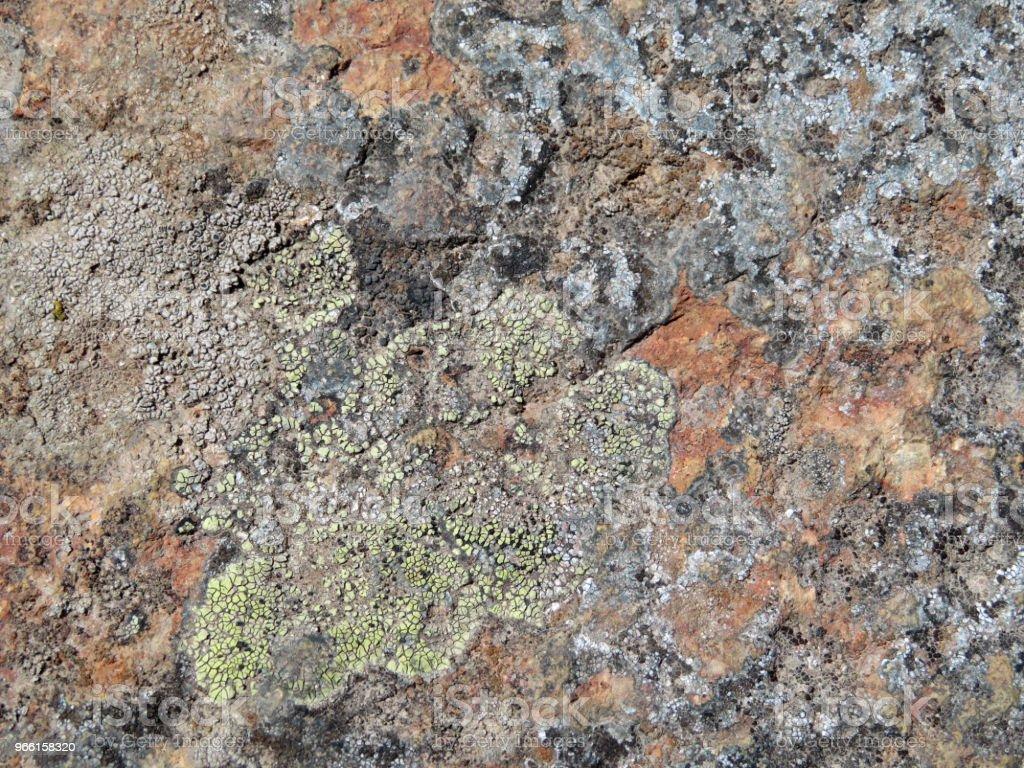 Rock stenens yta med lav och mossa - Royaltyfri Alger - Växt Bildbanksbilder
