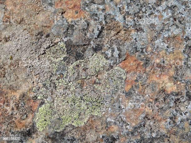 Rock Stenens Yta Med Lav Och Mossa-foton och fler bilder på Alger - Växt