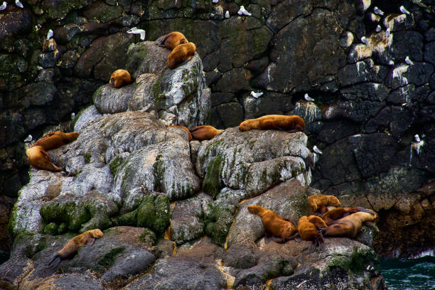 Rock wall with enormous biodiversity: Seaweed, moss, fungus, animals, sealion, birds. A fascinating color contrast. Seascape, fine art. In the Kenai Fjords National Park, Seward, Alaska. July 28, 2018 stock photo
