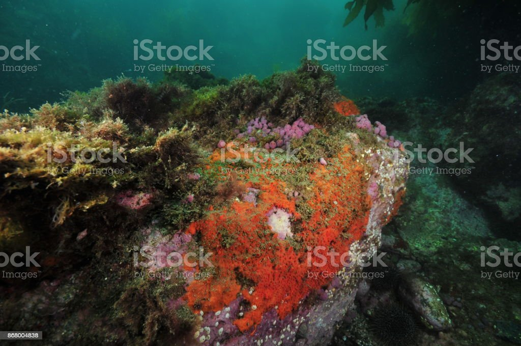 Rock with colorful invertebrates stock photo
