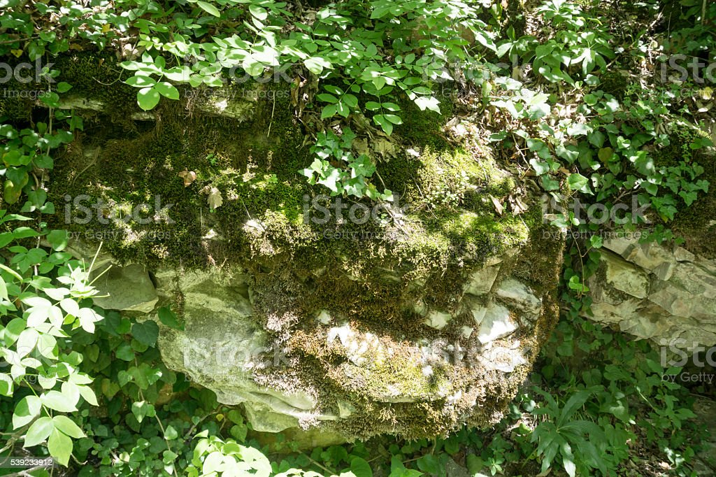 Rock with ivy foto de stock libre de derechos