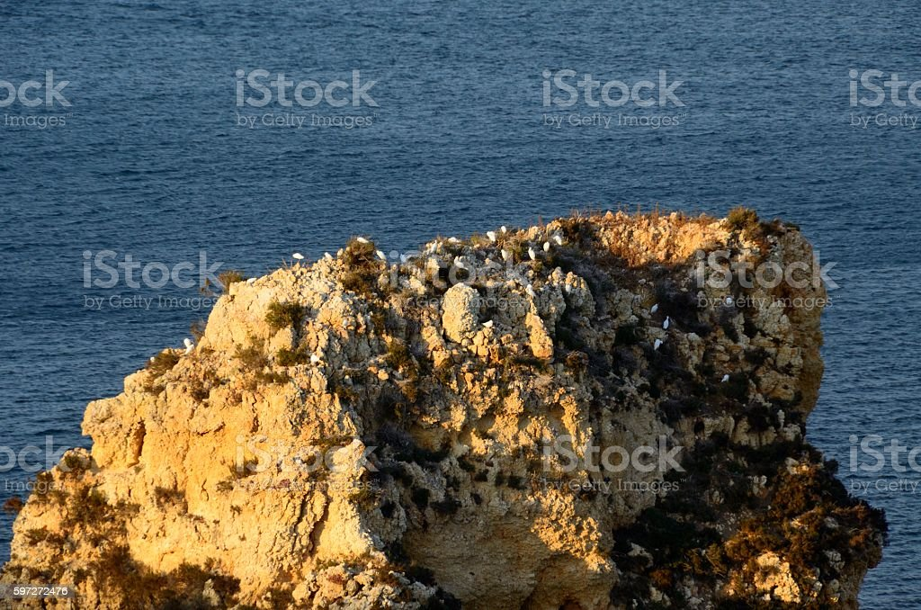 Roca con gaviotas en Ponta da Piedade, Lagos royalty-free stock photo
