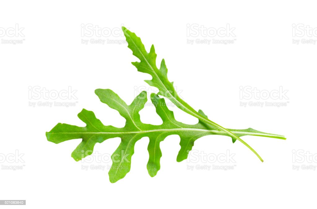Rocket leaves stock photo