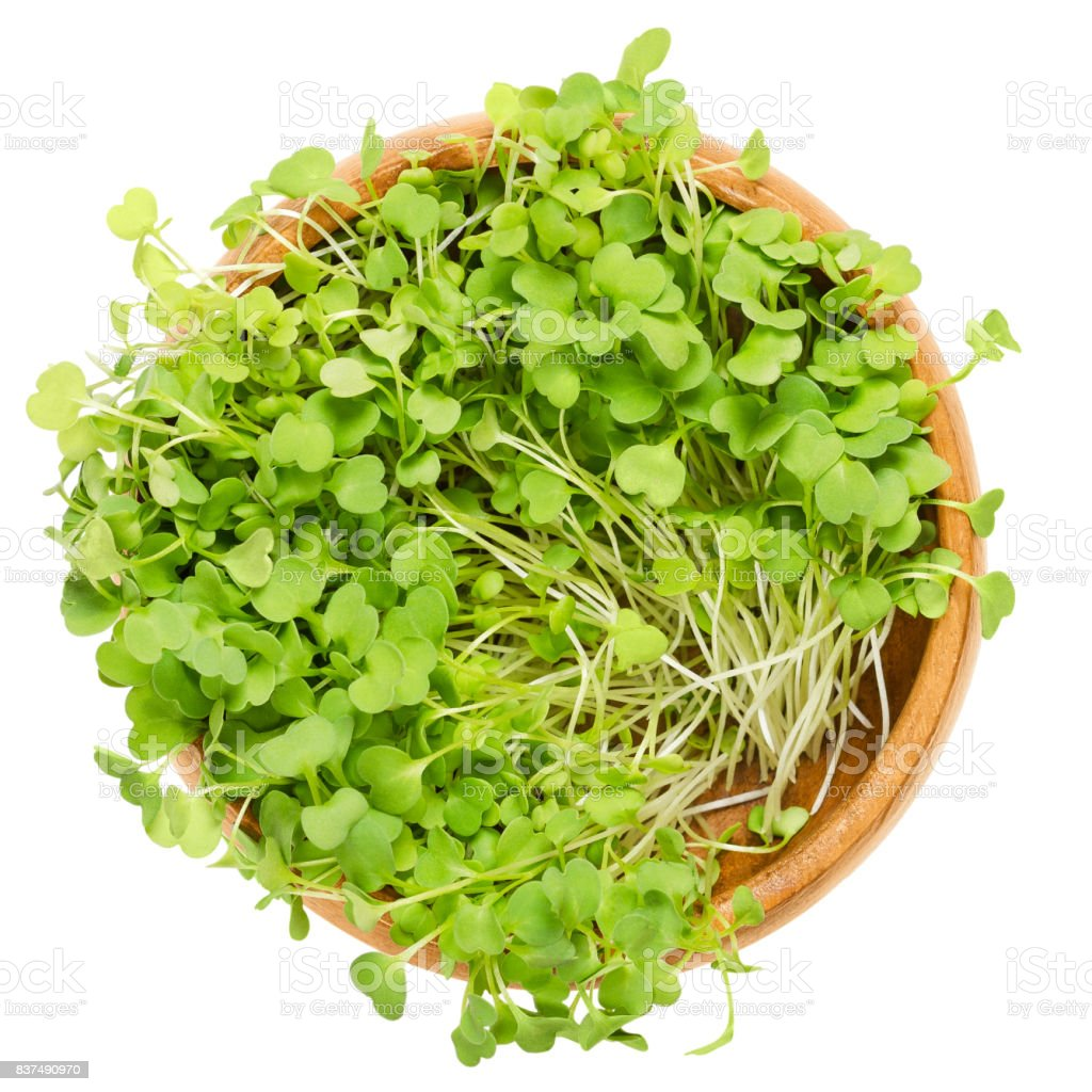Rocket salad sprouts, arugula, in wooden bowl over white stock photo