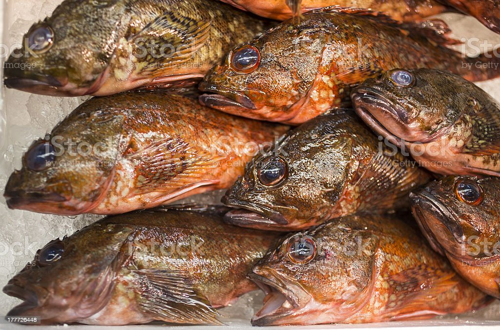 Rockfish at Seafood Market royalty-free stock photo