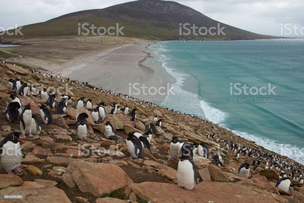 Rockhopper Penguins stock photo