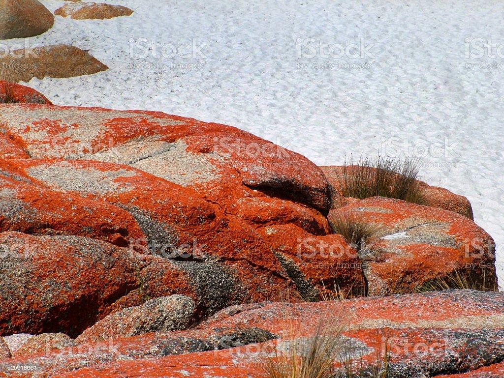Rocks & alga, St Helens, Tasmania - foto de stock