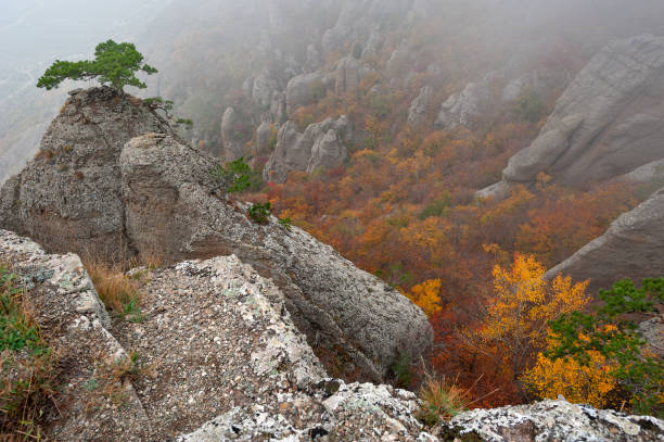 Rocks and autumn forest stock photo