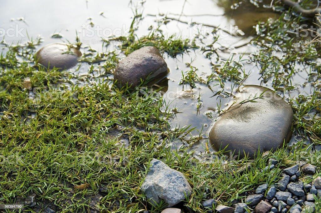 록스, 잔디 on edge of 연못 royalty-free 스톡 사진