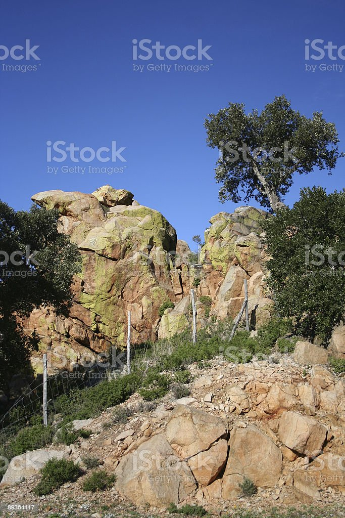 rocks and olive tree royalty-free stock photo