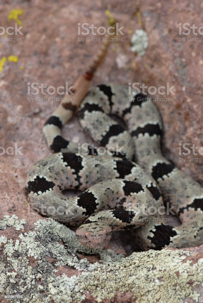 Rocks And Rattlesnakes stock photo