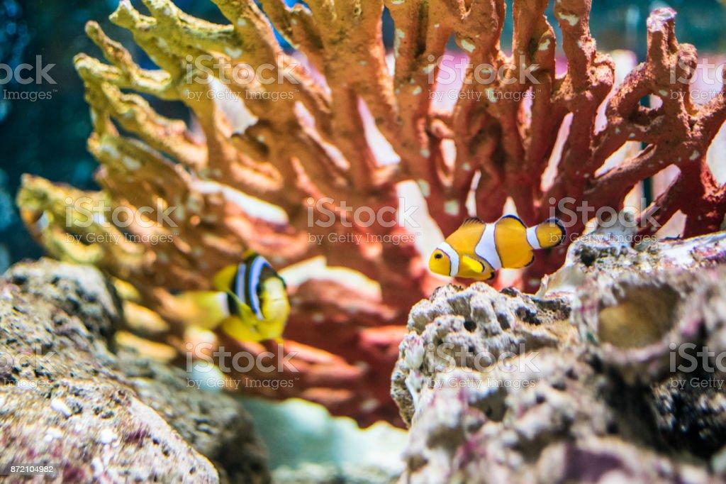 Rocks inside the aquarium stock photo
