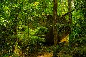 Wanderung durch den tropischen Regenwald nahe Mossman Gorge.