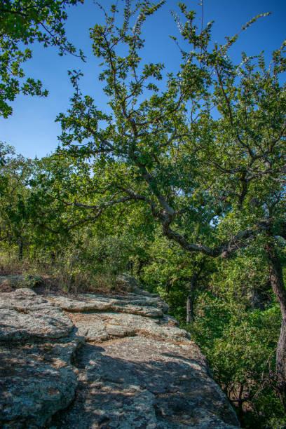 Rocks, tree and sky rural Texas stock photo