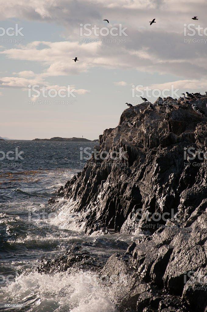 Rocas con cormorans island en ushuaia argentina 2 - foto de stock