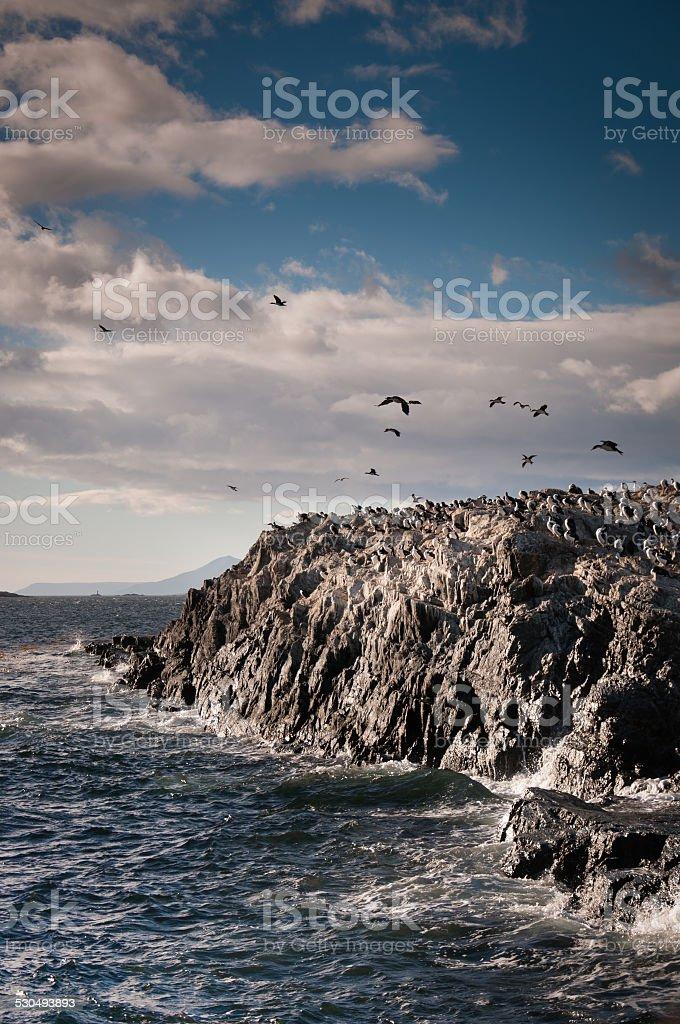 Rocas con cormorans island en ushuaia argentina - foto de stock