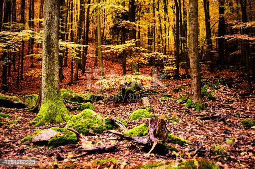 istock Rocks with moss in forest near Jevany near Prague in Autumn, Czech republic 1284262223