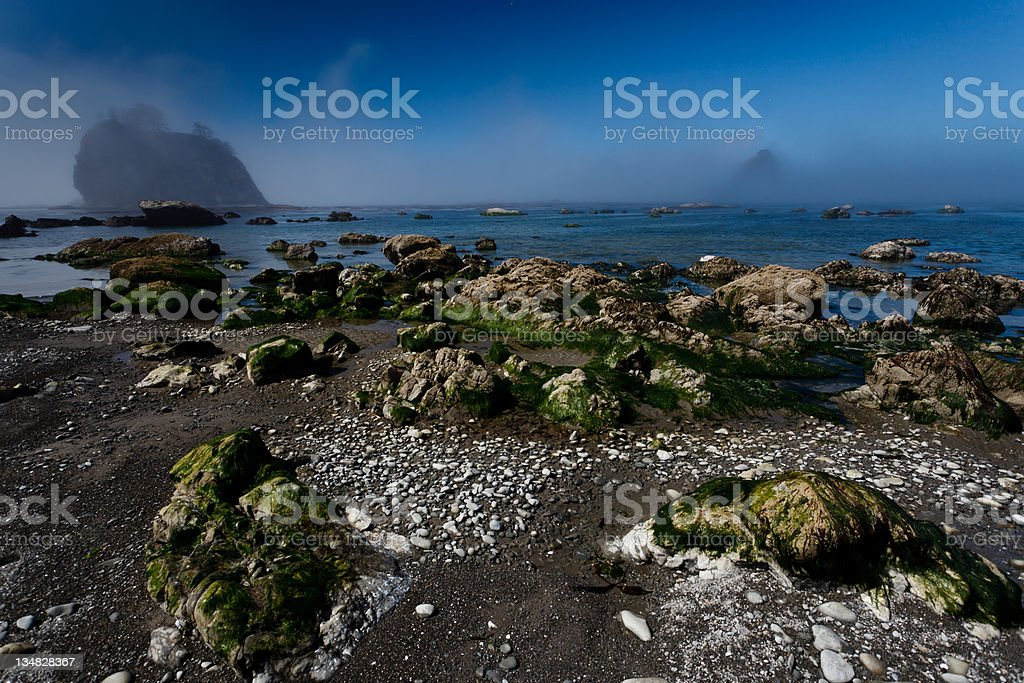 Rocky beach and sea stacks in morning fog royalty-free stock photo