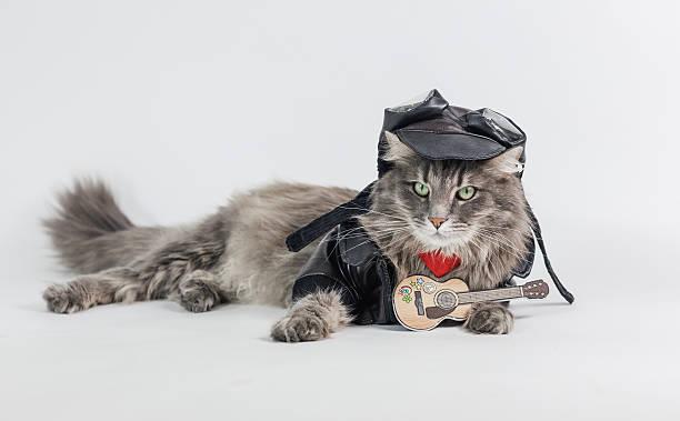 Rocky cat stock photo
