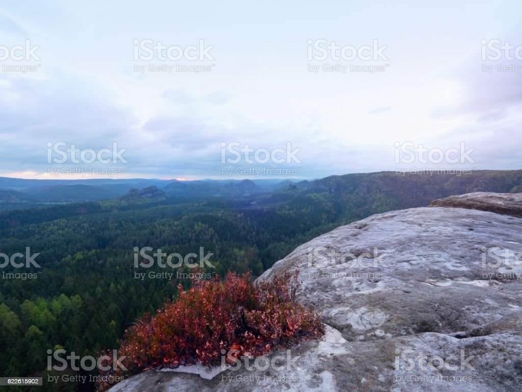 Rocky cliff with colorful  heather bush, gulch full of gentle fog and Sun is hidden in cloud. stock photo
