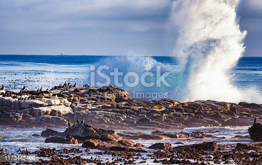 Rocky coast hit by huge wave in south africa's Cape of good hope with birds and seals covering the rocks.