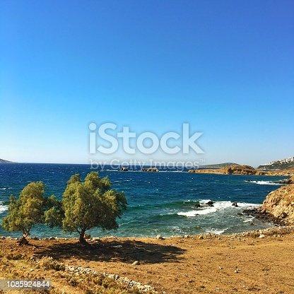 Olive Trees on coast