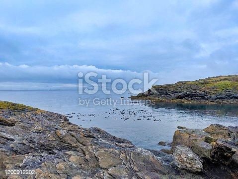1030314738 istock photo Rocky coastal shoreline of Friday Harbor in San Juan Island, WA, on an overcast day 1200912202