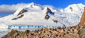 Rocky coastline with flock of Gentoo penguins and glacier with icebergs in the background at Half Moon island, Antarctic peninsula