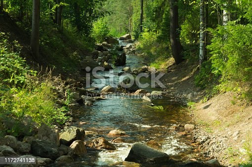 Rocky creek in the forest. river with rocks. dense overgrown forest with flowing stream nature background
