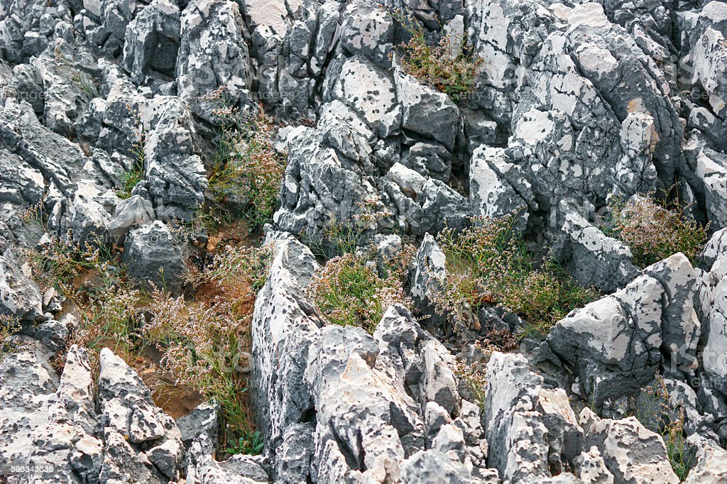 Rocky ground with green plants between them. royalty-free stock photo