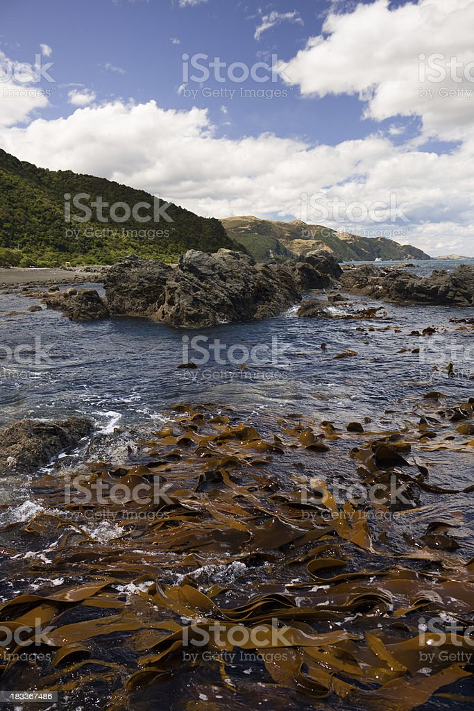 Rocky Kaikoura Coastline royalty-free stock photo