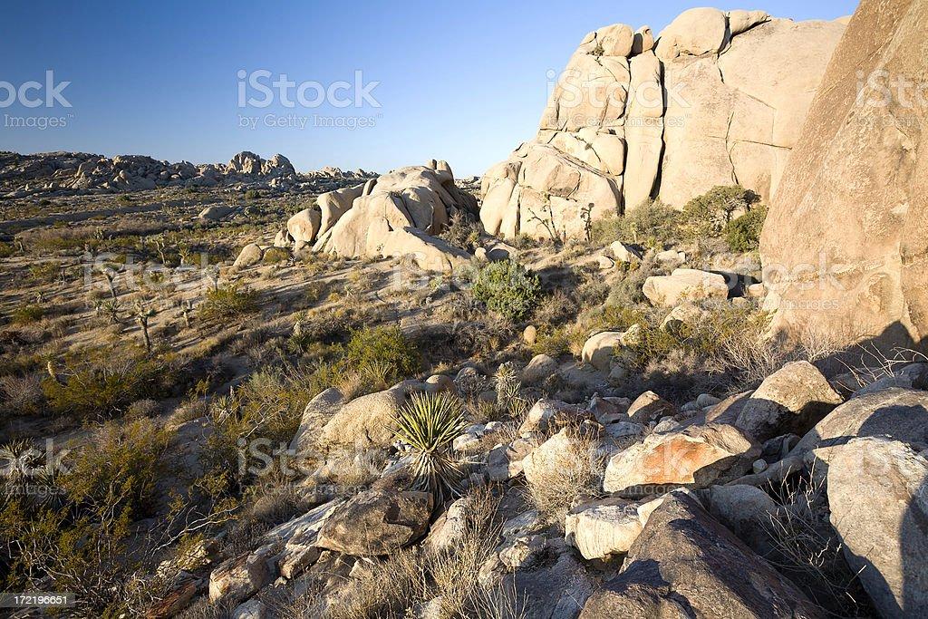 Rocky landscape. Joshua tree National Park royalty-free stock photo
