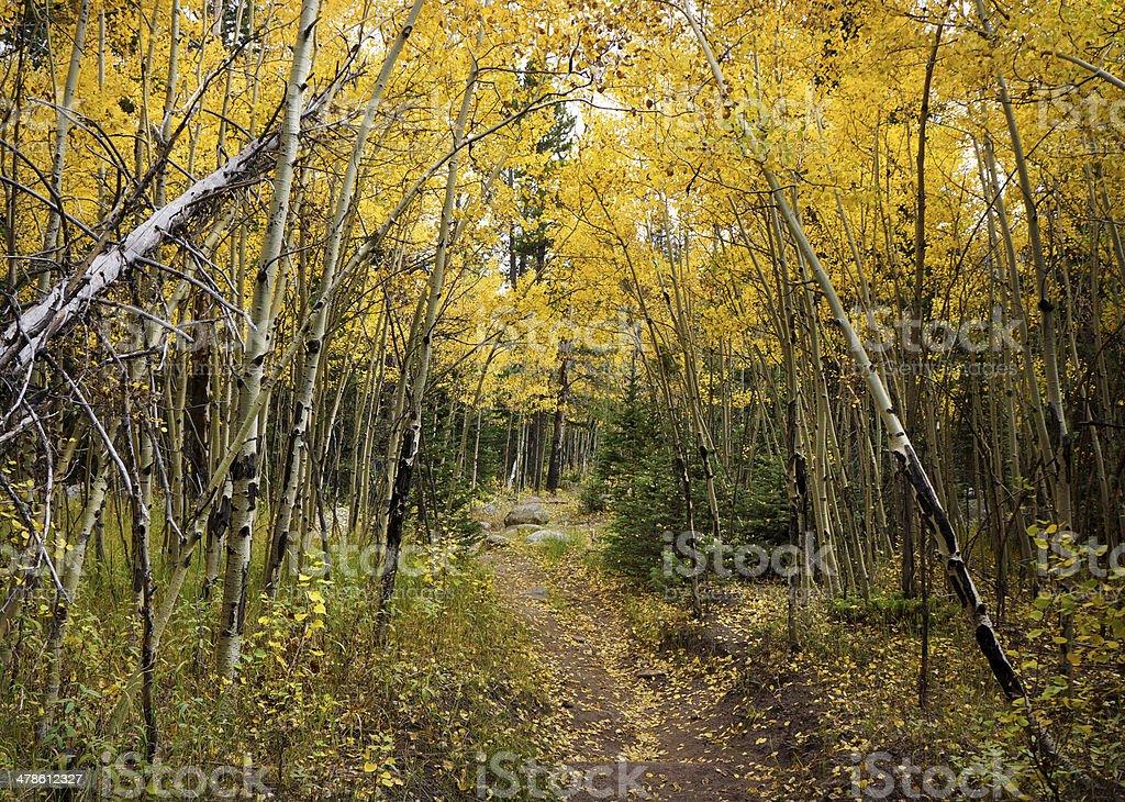Rocky Mountain fall trail stock photo