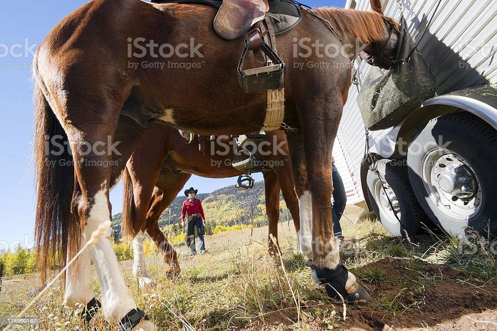 rocky mountain horseback lifestyle royalty-free stock photo