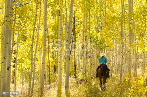 a woman riding a horse underneath an autumn aspen tree forest landscape. vertical wide angle, low angle composition taken in the san juan range of the colorado rocky mountains. such beautiful nature scenery and outdoor sports and adventure can be found in durango, colorado.