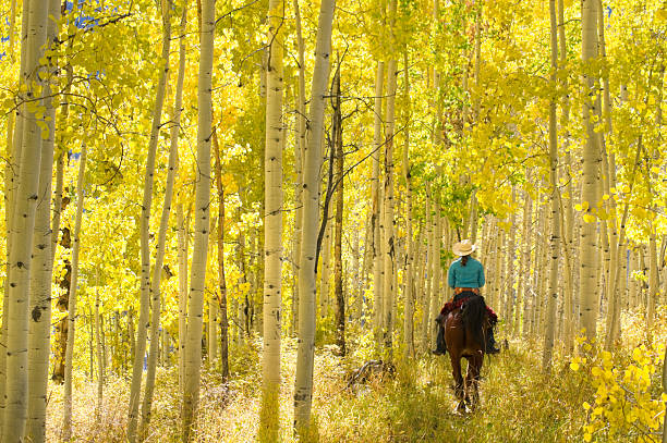 rocky mountain lifestyle a woman riding a horse underneath an autumn aspen tree forest landscape. vertical wide angle, low angle composition taken in the san juan range of the colorado rocky mountains. such beautiful nature scenery and outdoor sports and adventure can be found in durango, colorado. san juan mountains stock pictures, royalty-free photos & images