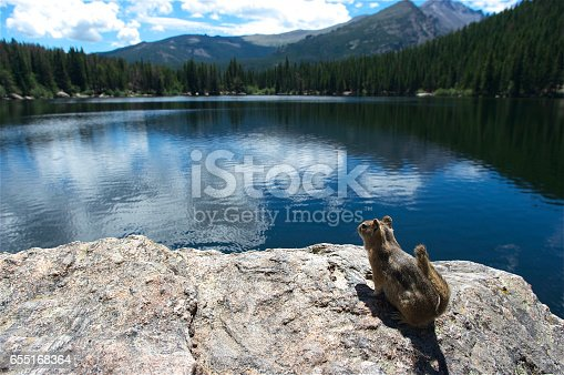 Forest, Water, Waterfall, Woodland, Boulder - Colorado, Rocky mountain national park