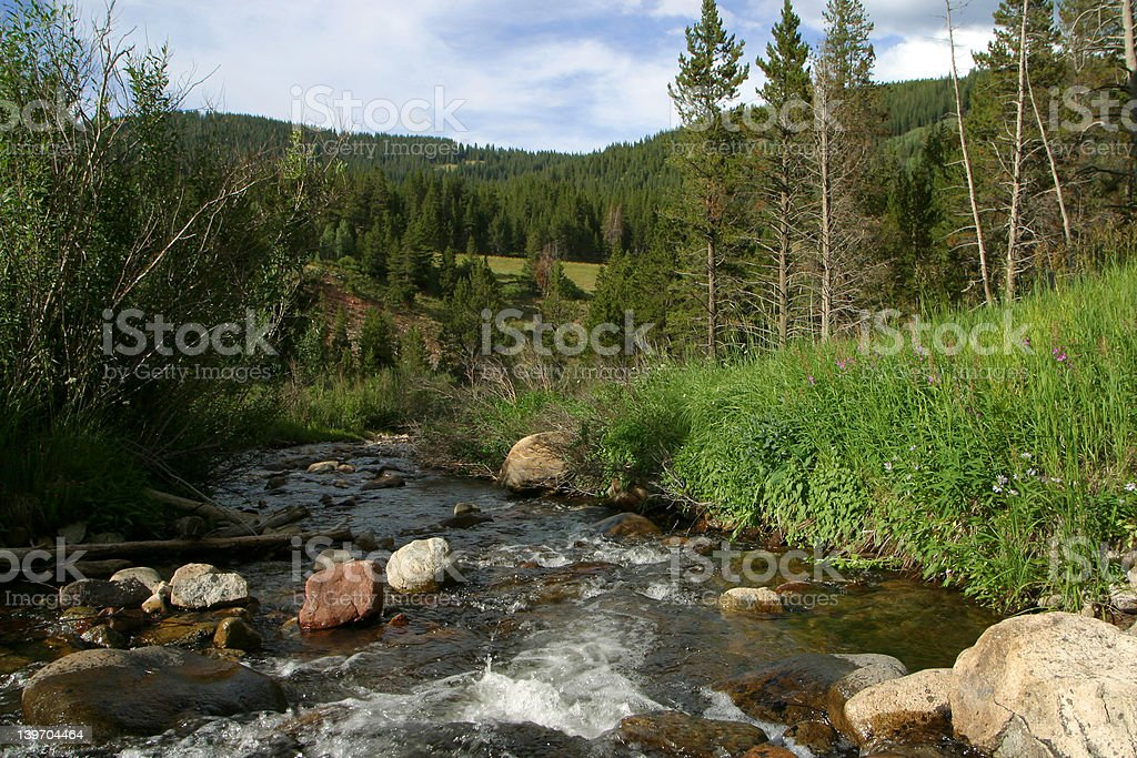 Rocky Mountain Stream – Foto